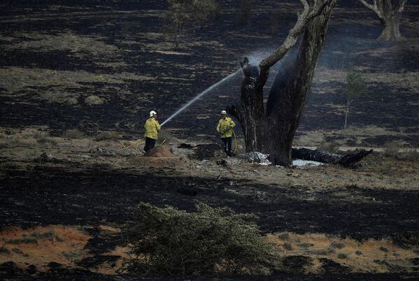 Пожарные тушат тлеющее дерево оставшееся после пожара в Австралия. 2 февраля 2020 года