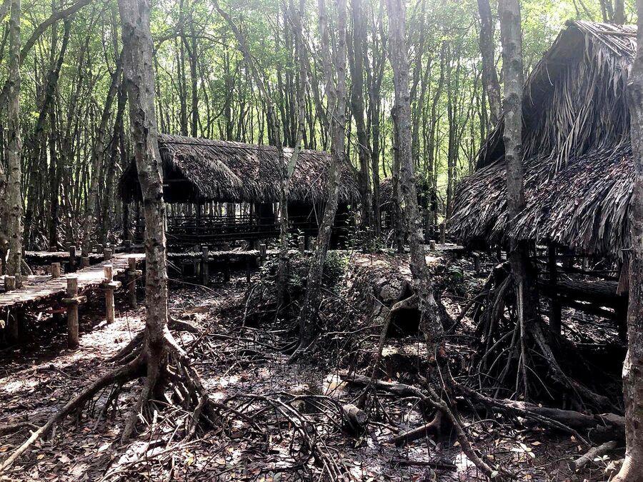 Партизанская база в мангровых джунглях