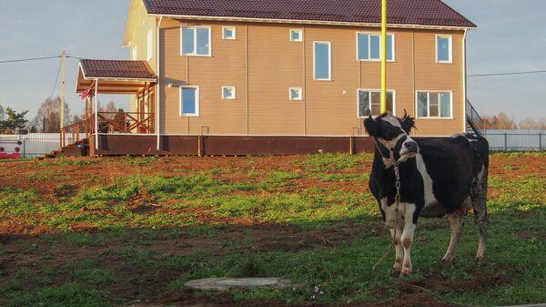Корова на участке семьи Богачевых