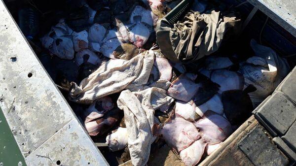 Незаконный вылов камбалы в Азовском море украинским судном