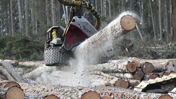 Валочно-пакетирующая машина распиливает стволы поваленных деревьев на лесозаготовительном участке в Красноярском крае