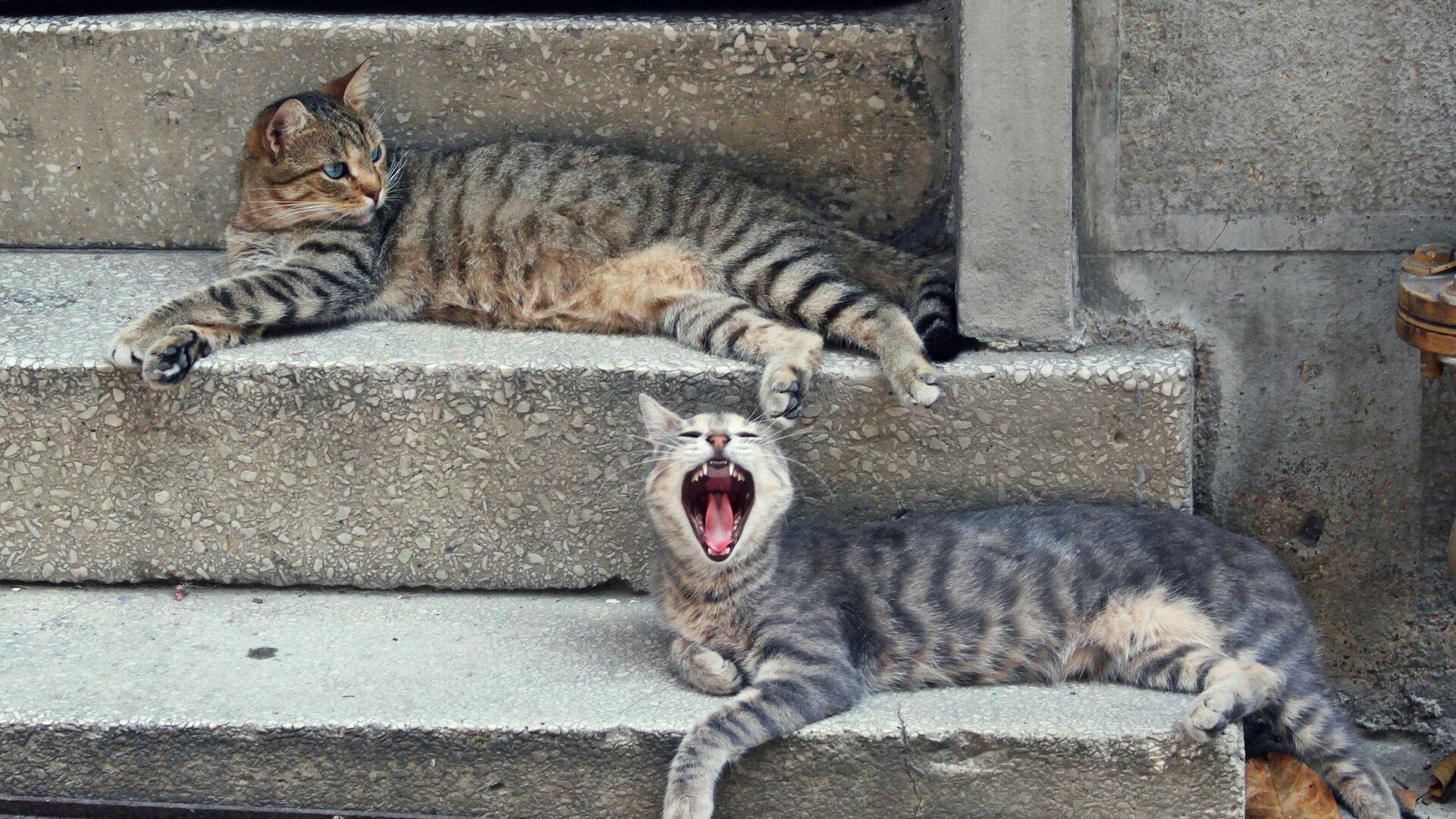 Стамбульские кошки - РИА Новости, 1920, 12.04.2021