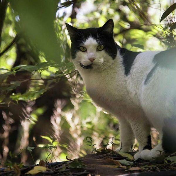 Кот в Аптекарском огороде