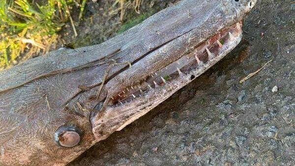загадочный крокодил, Уэльс