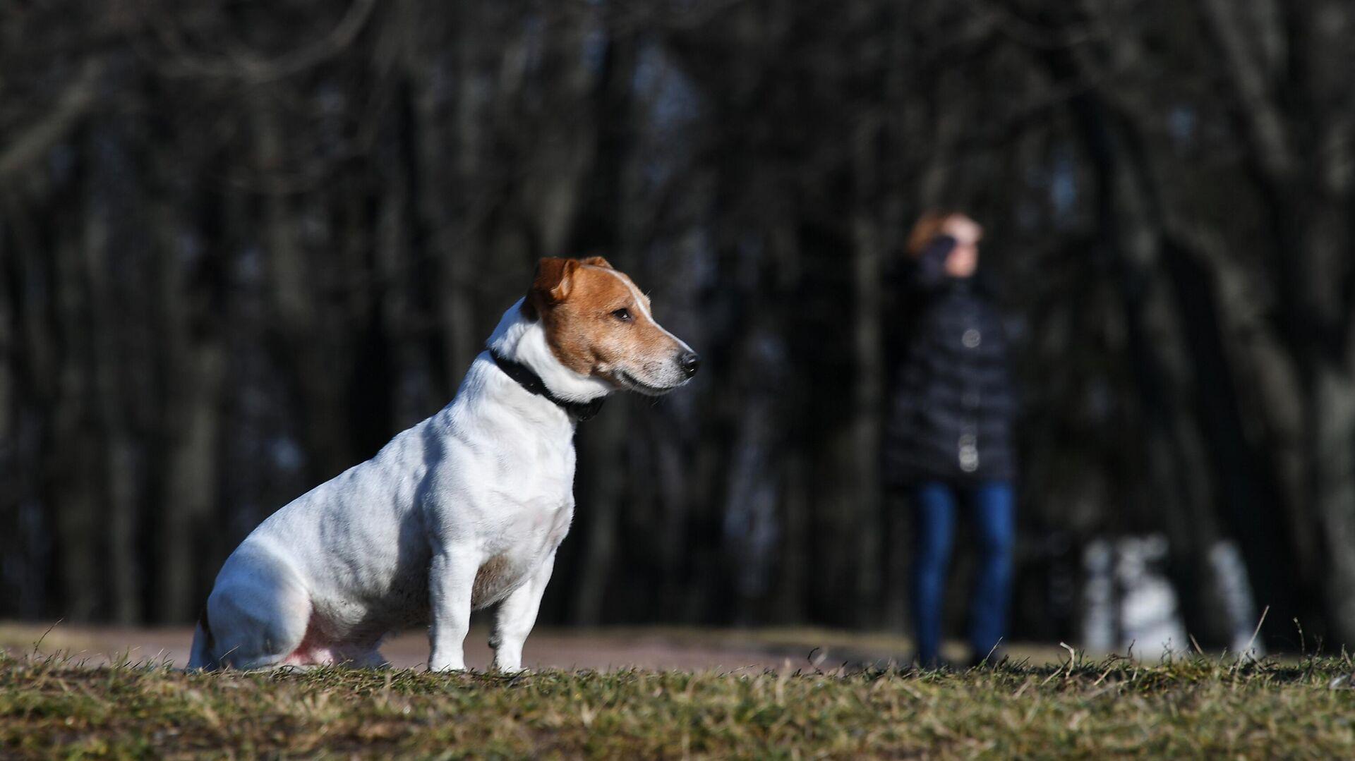 Собака в парке - РИА Новости, 1920, 05.03.2021