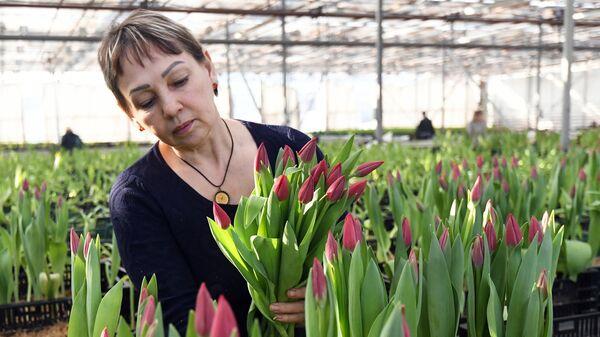 Сотрудница срезает цветы к празднику 8 Марта в оранжерее муниципального предприятия Управление зеленого строительства в Красноярске