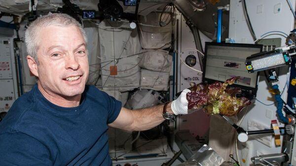Ученые оценили качество салата, выращенного в космосе