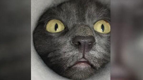 Любопытный кот из Сибири стал звездой Сети
