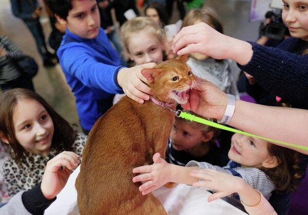 Посетители гладят кошку абиссинской породы на международной выставке Кэтсбург в выставочном центре Крокус Экспо в Красногорске