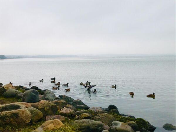 Плещеево озеро в Переславле-Залесском