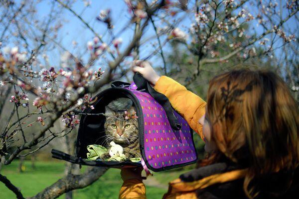 Девушка с котом в парке в Бухаресте