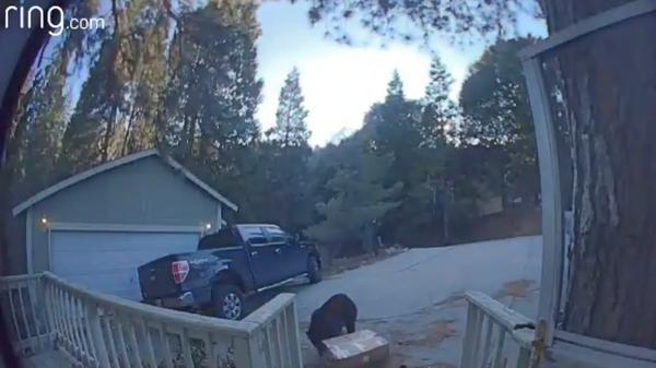 Стоп-кадр с видео медведя, крадущего коробку