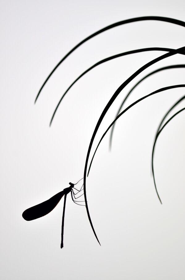 Minghui Yuan. Работа победителя конкурса Nature TTL Photographer of the Year 2020