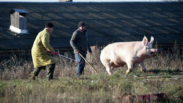 Рабочие на ферме в Киевской области Украины