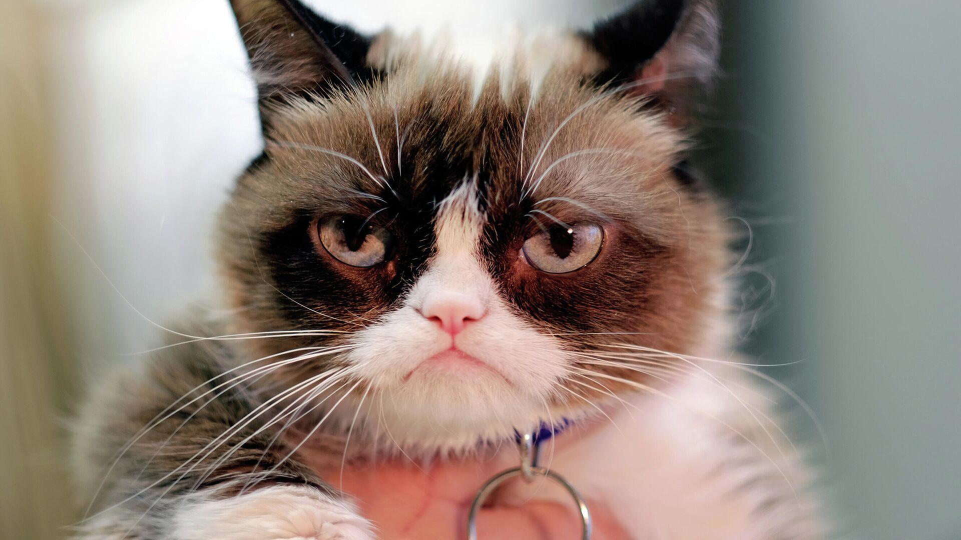 Сердитый кот (Grumpy Cat) - РИА Новости, 1920, 23.09.2020