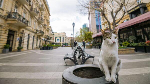 Кошка на опустевшей улице города Баку