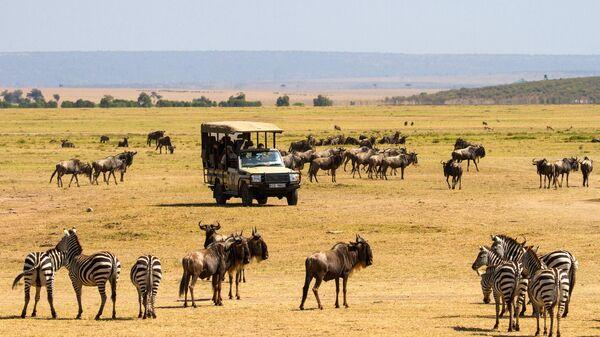Туристы наблюдают за дикими животными в национальном заповеднике Масаи-Мара в Кении