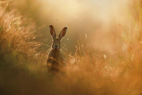 Работа Peter Lindel, победителя фотоконкурса GDT Nature Photographer of the Year 2020