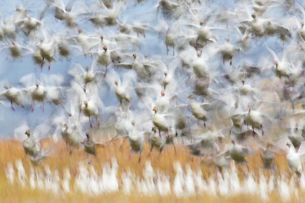 Работа фотографа Flurin Leugger, победителя в категории Птицы в фотоконкурсе GDT Nature Photographer of the Year 2020