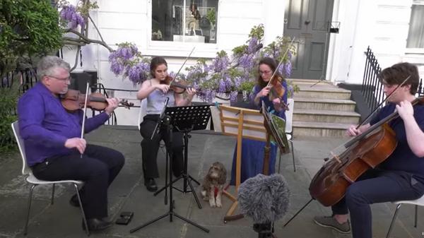 Домашний концерт классической музыки во время карантина