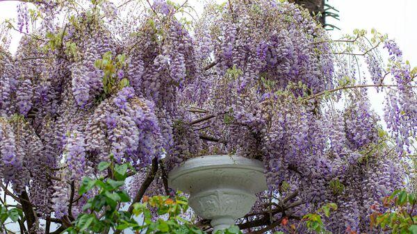 Майское цветение в Никитском ботаническом саду