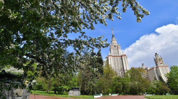 Цветение деревьев в Москве