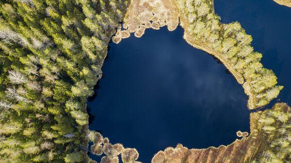 Лесные озёра в Карелии