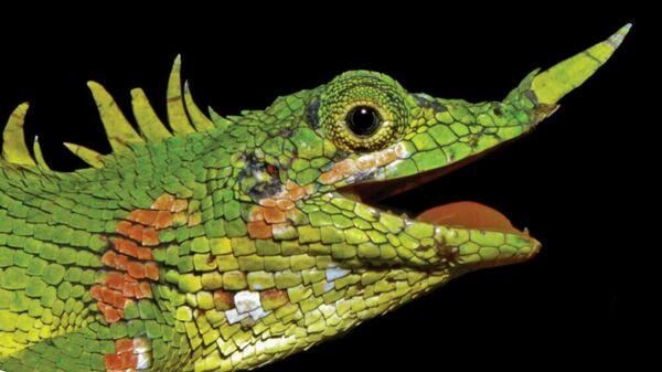 Индонезийская ящерица