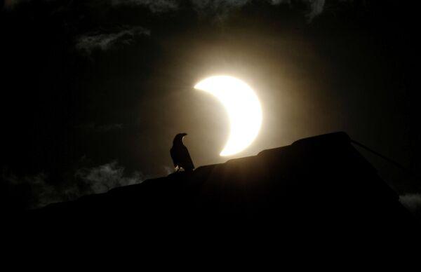 Ворона во время солнечного затмения в Найроби, Кения