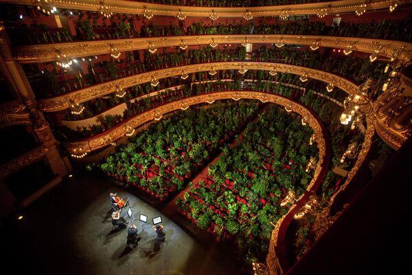 Концерт для 2 292 цветов на сцене Оперного театра Лисеу в Барселоне