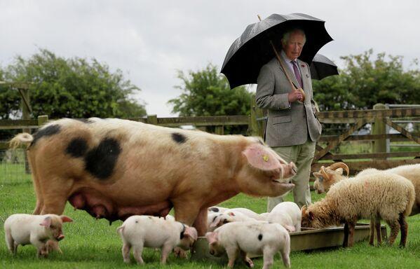 Принц Чарльз во время посещения фермерского парка Котсуолд