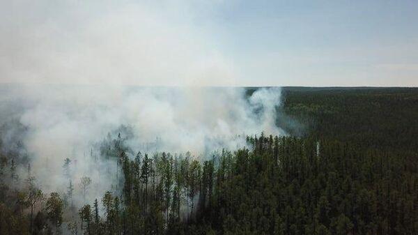 Сибирь и Дальний Восток  охвачены лесными пожарами