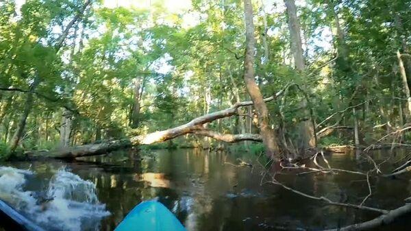 Стоп-кадр видео нападения аллигатора на каяк Пита Джойса на реке Ваккамо в штате Северная Каролина