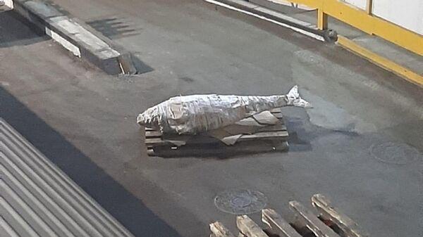 Рыбаки с судна Бухта Наталии выловили голубого тунца  весом 184 кг