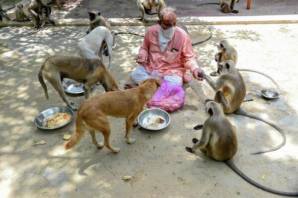 Смотритель храма Bhekhaddhari Goga Maharaj temple кормит бездомных животных в Ахмадабаде, Индия