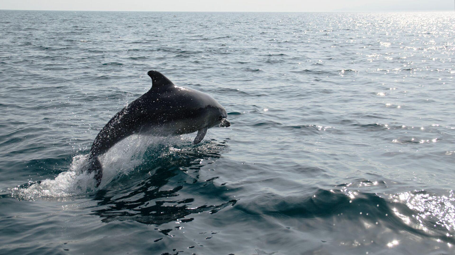 Дельфин в Черном море - РИА Новости, 1920, 14.09.2021