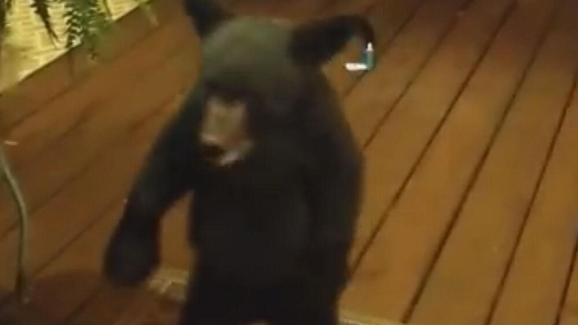1575775073 0:214:1000:777 1920x0 80 0 0 3f7ffa81aeb8b3f70c808594f4c30bfd - В США медвежонок попытался пройти через стеклянную дверь дома