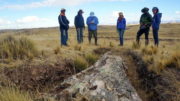 Гигантское ископаемое дерево, обнаруженное на Центральном плато в Перу