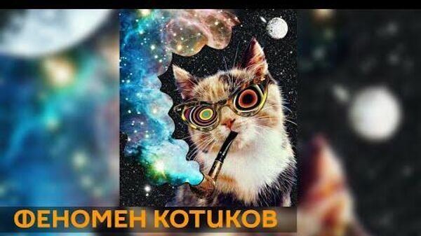 Феномен котиков