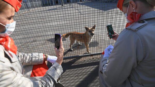 Сотрудницы Аэрофлота у вольера со служебными собаками посещения кинологического подразделения авиакомпании Аэрофлот в аэропорту Шереметьево