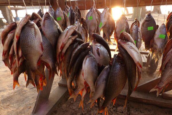 Рыбацкий улов на рыболовной базе в Астраханской области