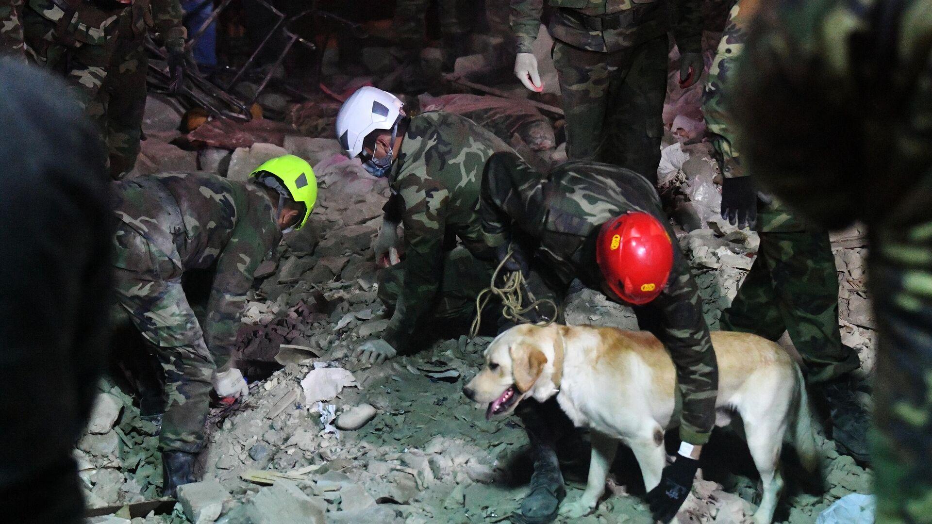 Поисковая собака работает на месте разбора завалов разрушенных домов после ракетного обстрела города Гянджа. - РИА Новости, 1920, 17.10.2020