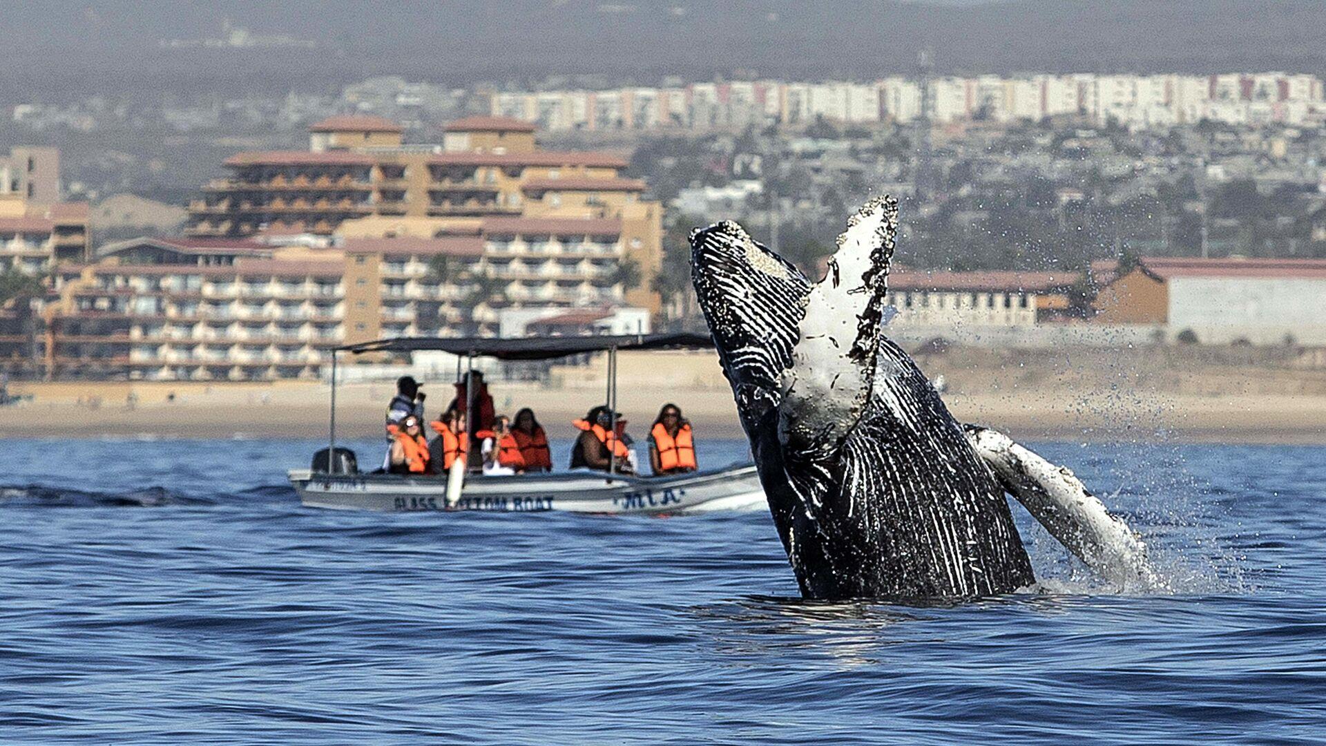 Люди смотрят, как горбатый кит выпрыгивает из воды в Лос-Кабосе, Мексика - РИА Новости, 1920, 25.10.2020