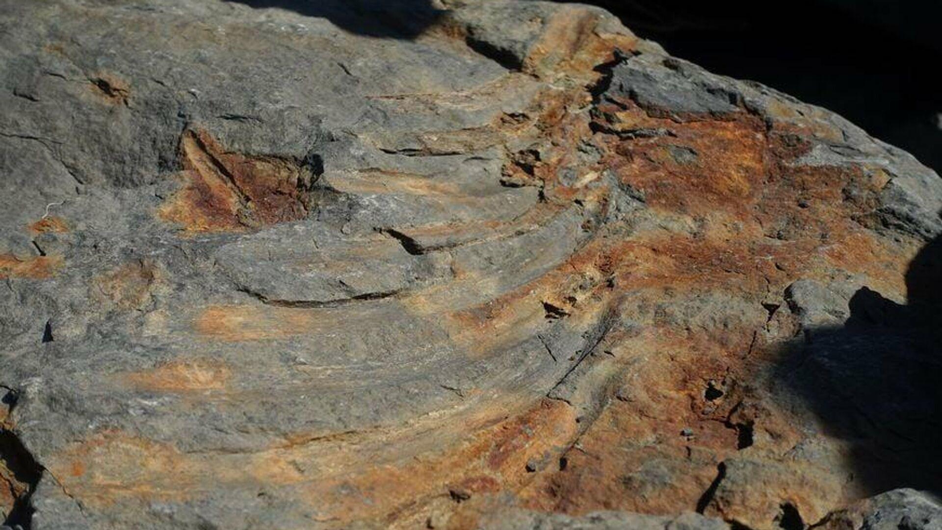 Останки ихтиозавра, найденные в породе на берегу на острове Русском - РИА Новости, 1920, 28.10.2020