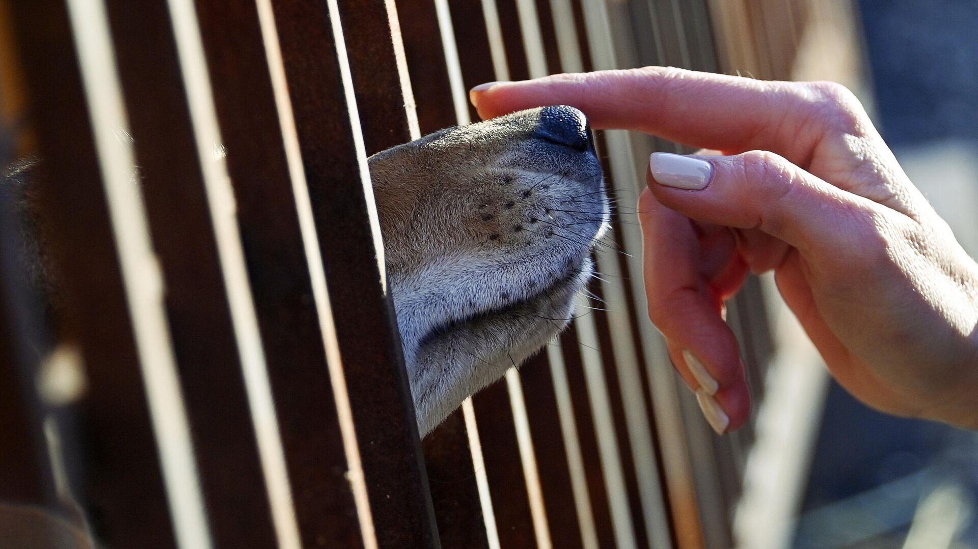 Собака в вольере приюта для бездомных животных - РИА Новости, 1920, 26.11.2020