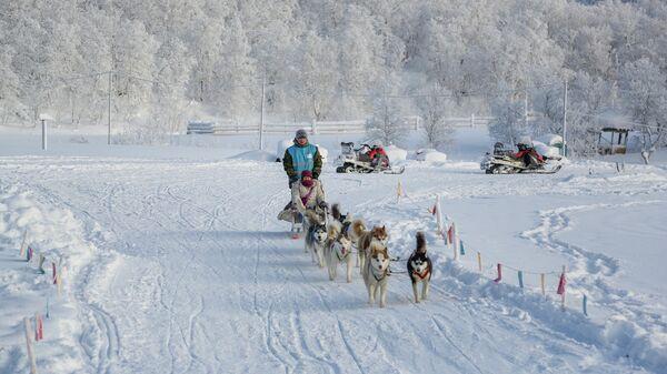 Туристы из Китая катаются на собачьих упряжках в туристическом парке Северное сияние в Мурманской области