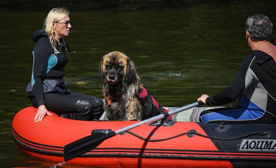 Тренировка собак-водолазов добровольного отряда Соттер