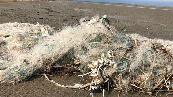 Сети на побережье Каспийского моря, где были обнаружены мертвые тюлени