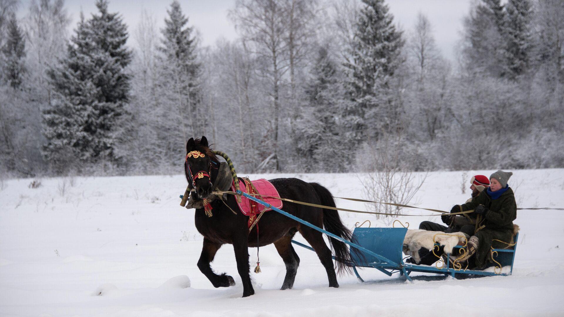 Катание на лошадях в Подмосковье - РИА Новости, 1920, 11.12.2020