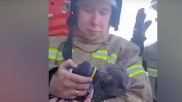 В Татарстане пожарные спасли и реанимировали кота